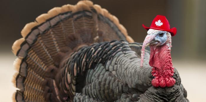 Canadian_Turkey